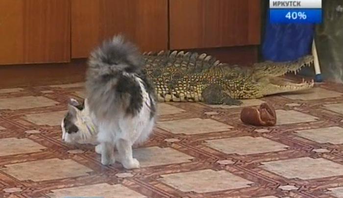 Crocodile as a pet? Bad bad idea!