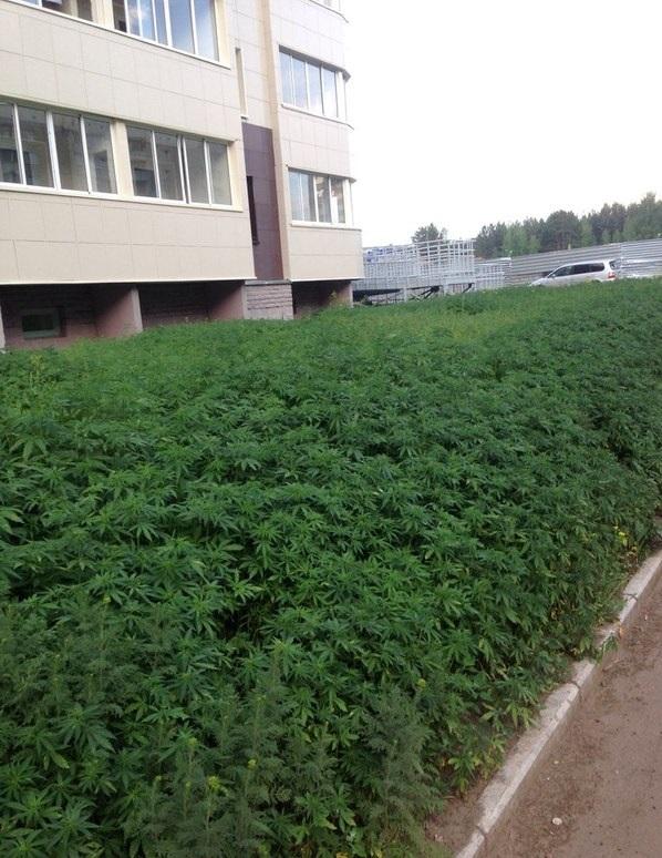 Russian Cannabis Company Spends $200K for Ebola.com