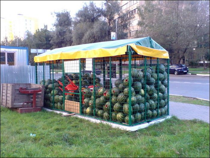 watermelon_03