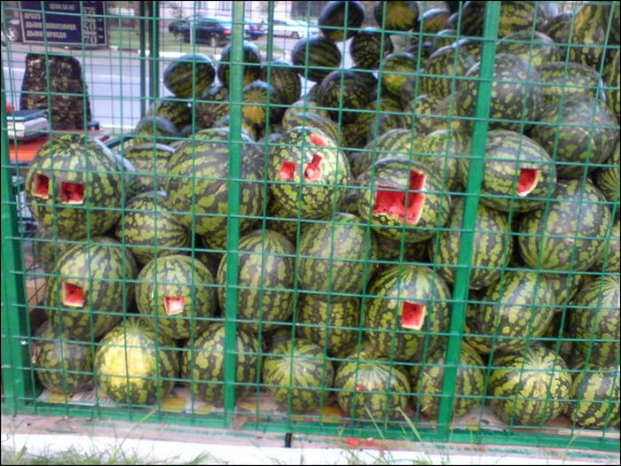 Watermelons for Homeless