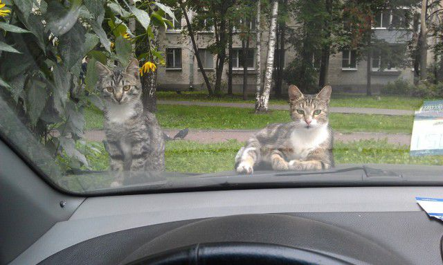 Cat Goes for a Ride