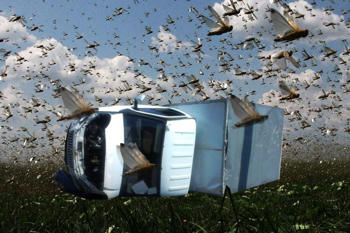 Clouds of Locusts Turned Over a Truck in Russia