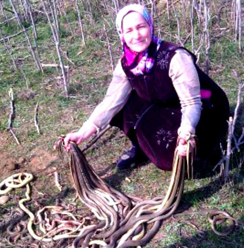 In Dagestan 60-Year Old Woman Killed 80 Snakes [photos/videos]