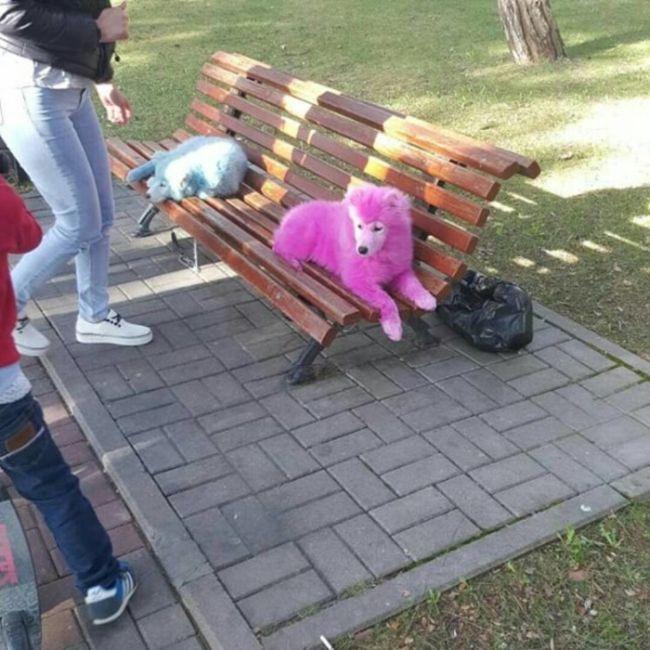 rozoviy_samoed_04