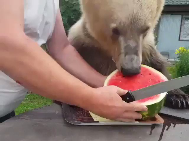 Russia Man Share Watermelon with His Bear [video]