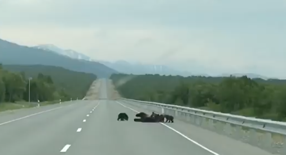 Bear Family on a Road [video]