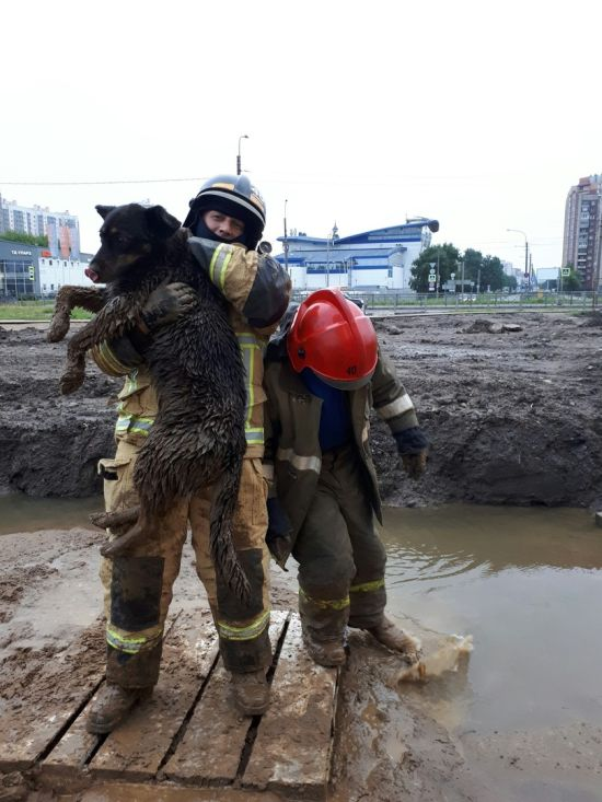 Dog Stuck in Mood Was Rescued [photos + video]