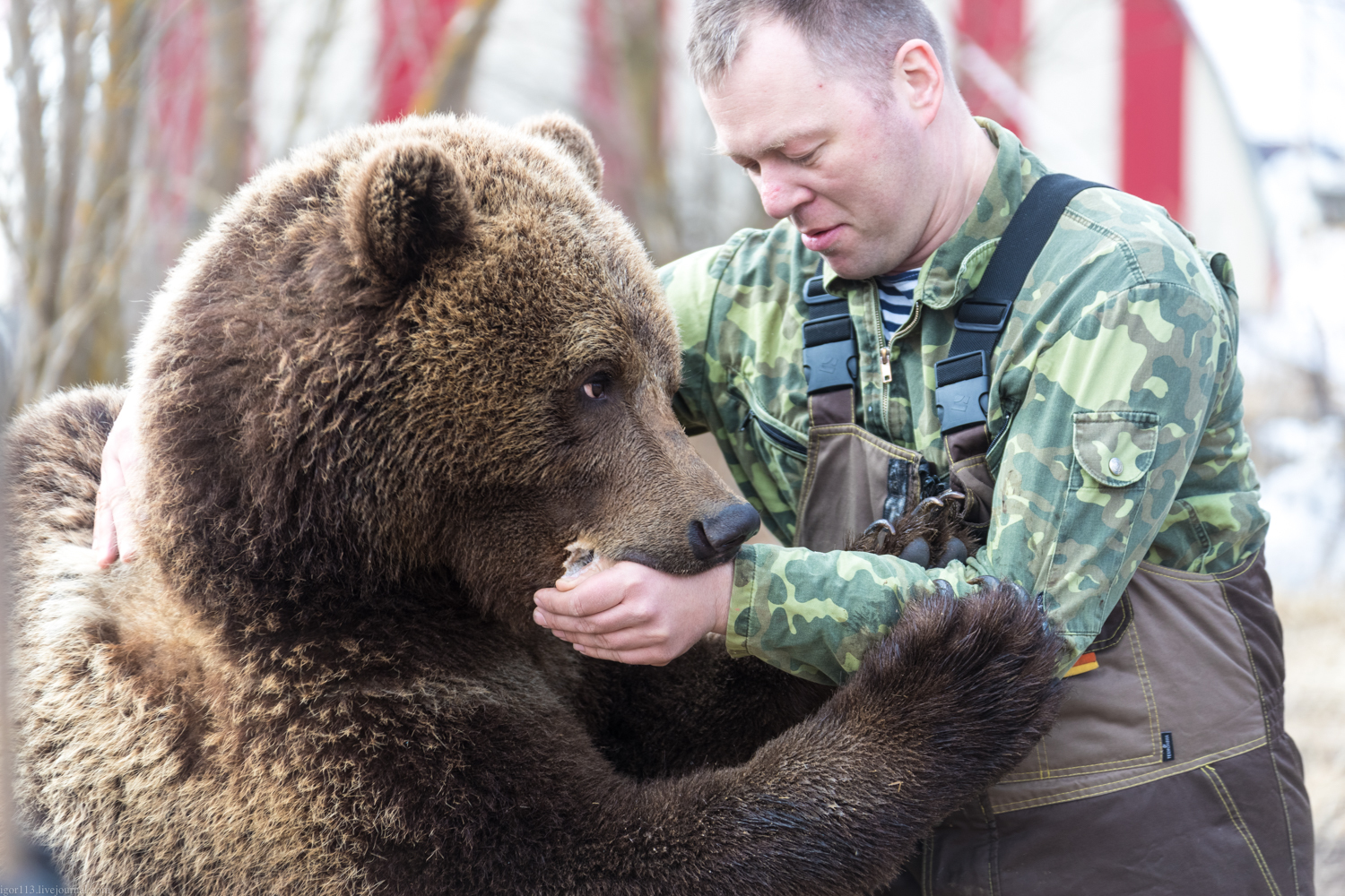 A Story of a Bear That Lives at the Airfield and Fond of Sucking Human Hands