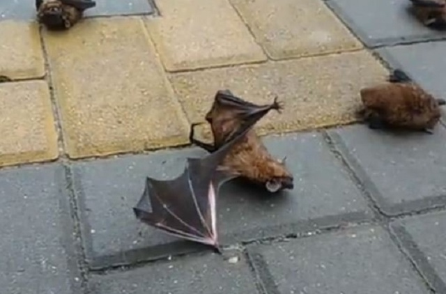 Hundreds Bats Are Lying on Ground in a Russian Town Rostov