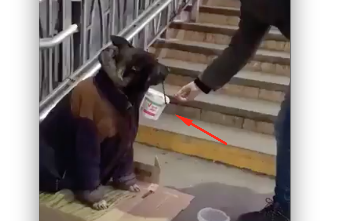 Dog is Asking for the Change
