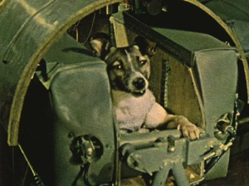 The Hearbreaking Story of Laika: Dog in Space Who Never Got Back