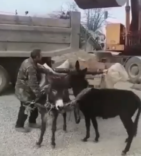 When You Think Donkeys Fit For Breakstone Transportation