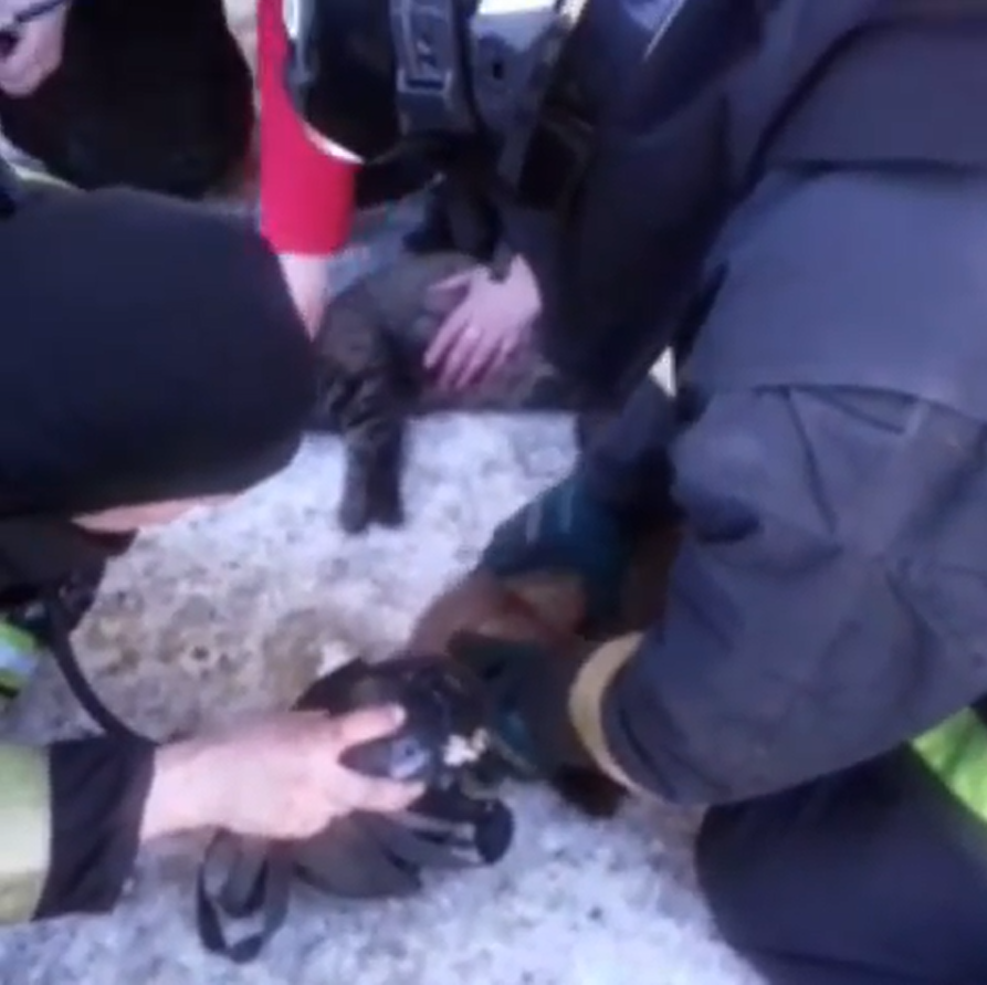 Cats Reanimated by Firefighters