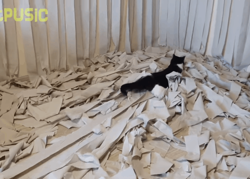 Toilet Paper Paradise Room for the Cat