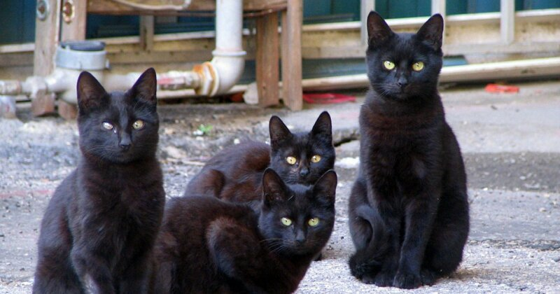 60 Black Cats Trying to Survive With Their Crazy Old Owners