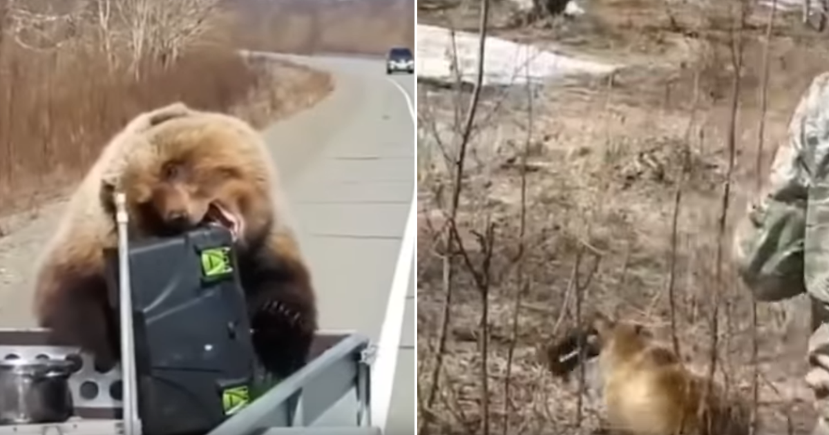 Bear Steals Food of Hunters
