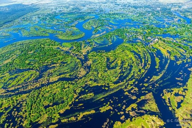 """Tropic Amazonia"" Found In Belarus"