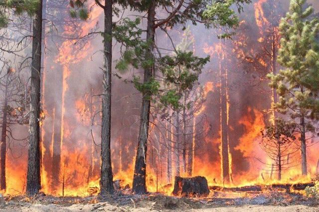 Сибирь в огне: пожар охватил 3 млн гектаров (8 фото +2 видео)