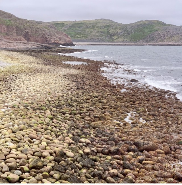 "Unusual ""Pebble"" Beach"