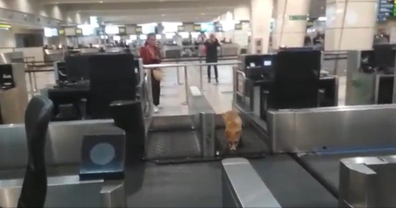 Non Grata Guest In the Domodedovo Airport