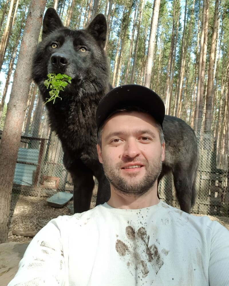 Love For Wolves Made This Man An Instagram Star