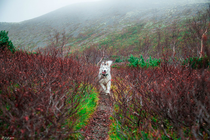 Happy Husky Travellers