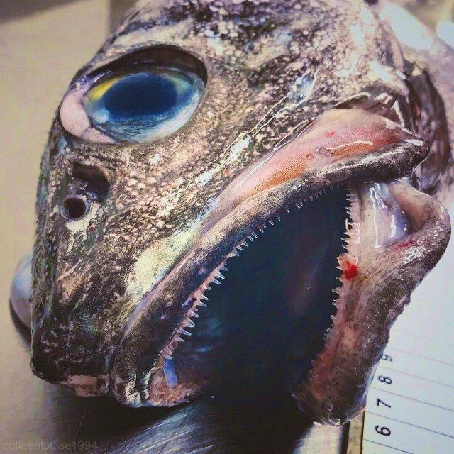 Русский рыбак достал со дна морских чудовищ. Это нужно видеть!