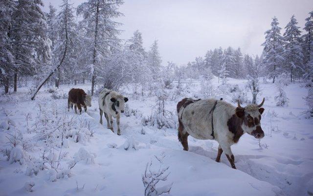 Животные в селе