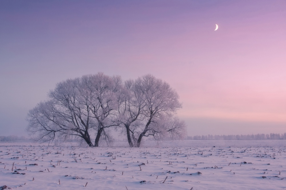 Photographer Wakes Up Early Every Day to Capture the Beauty of Winter