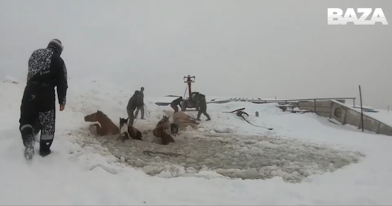 A Herd of Horses Fall Through the Ice
