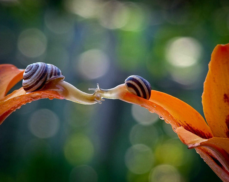 In the World Of a Snail