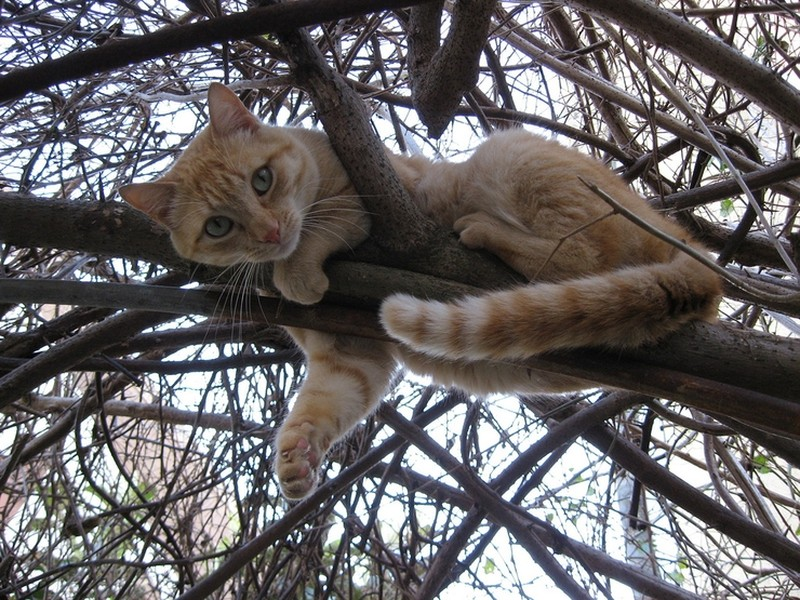 Spring Has Come, Cats Are Flying Back