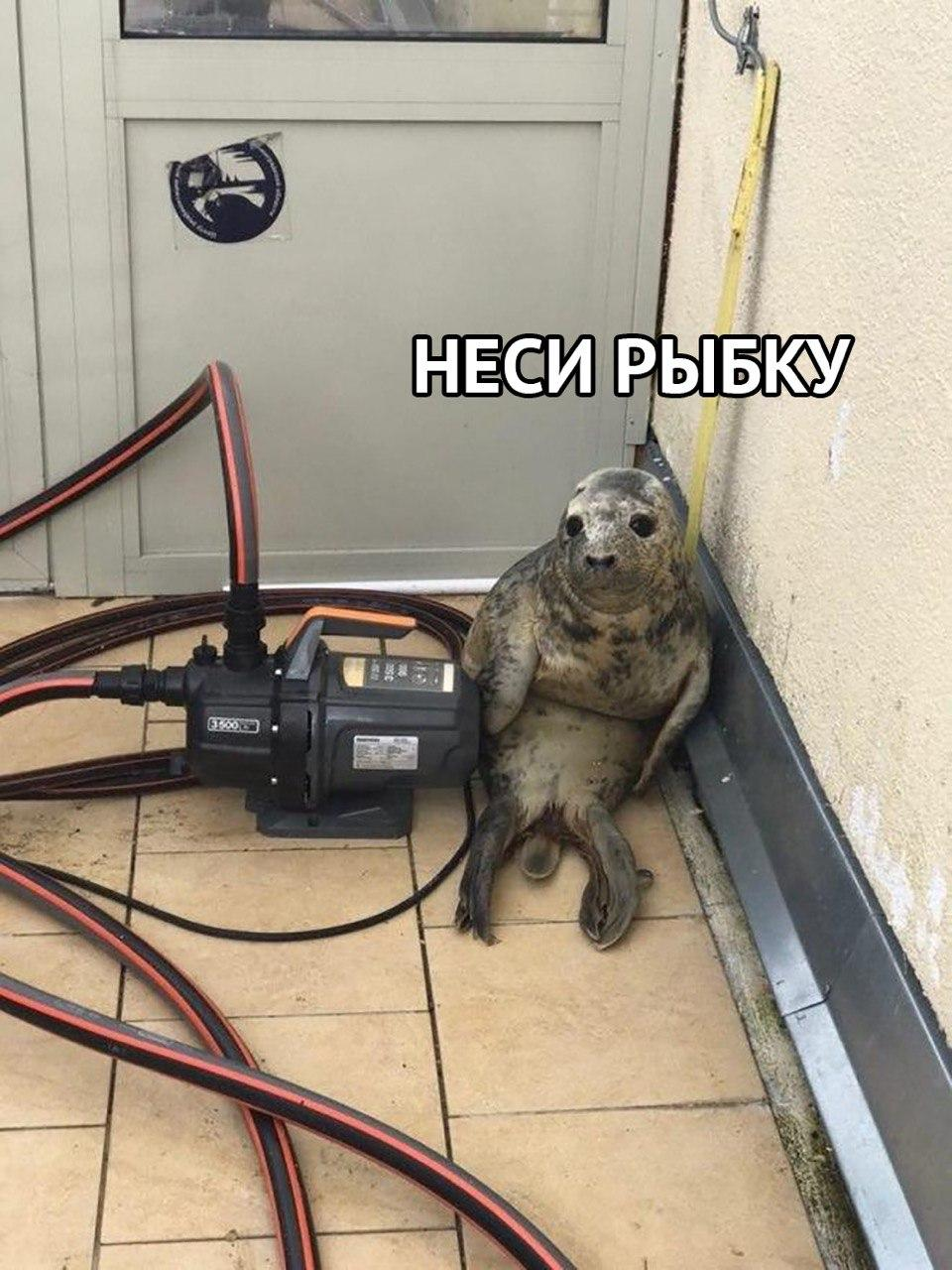 Seal Pup From St. Petersburg Becomes a Popular Meme