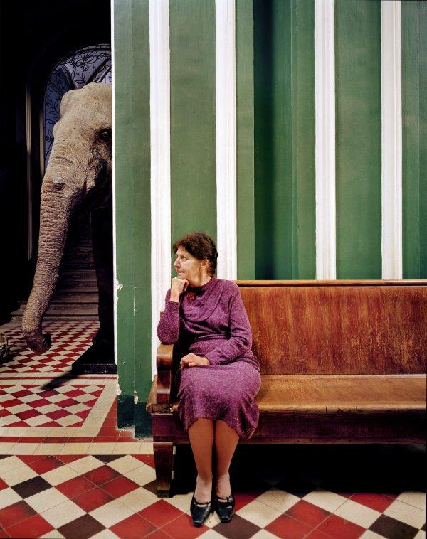 «Слон I», 2005 год