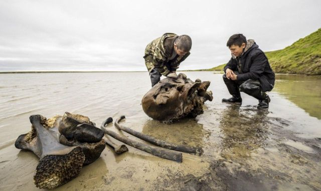 Mammoth Remains Found on Yamal Peninsular