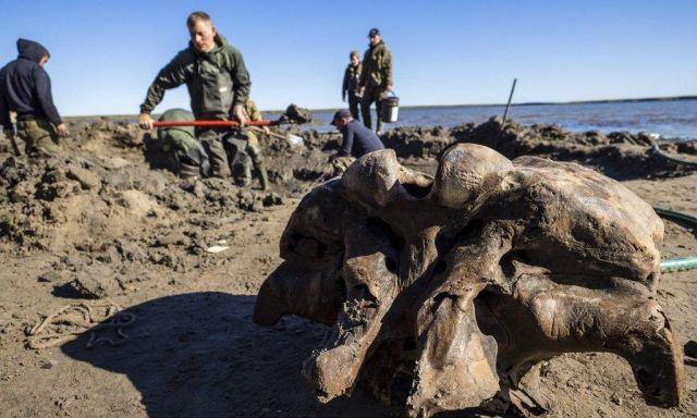 На Ямале нашли останки мамонта