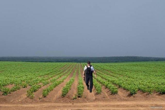 Александр Лукашенко с автоматом - на полях с картошкой