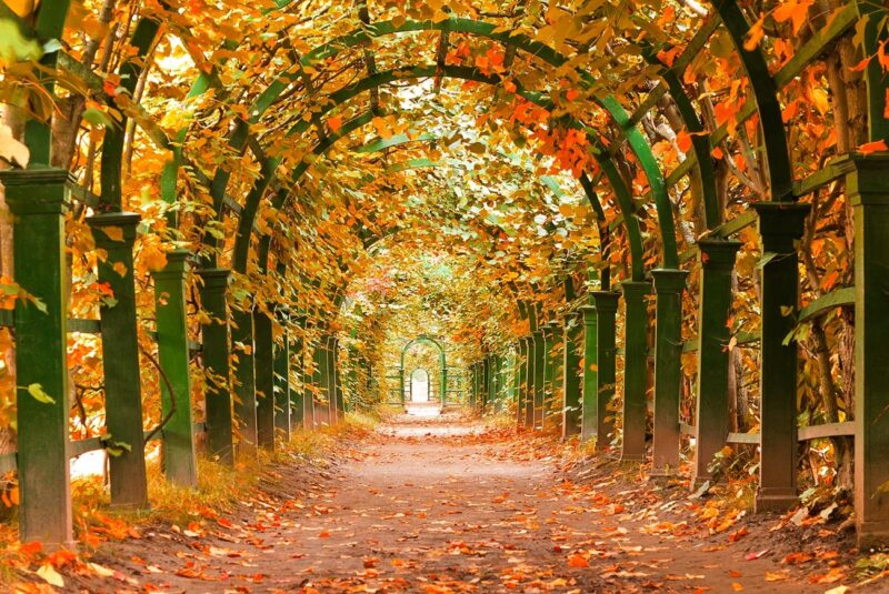 Beautiful Autumn In Russia