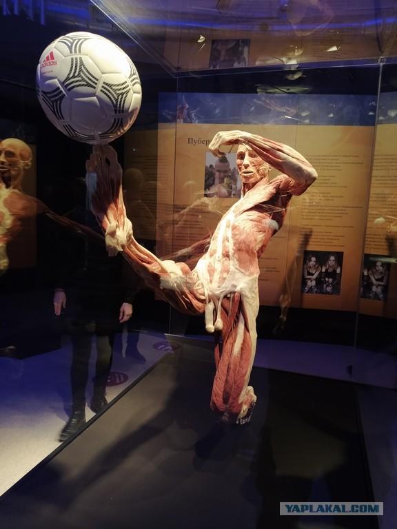 Посетил выставку Body Worlds на ВДНХ