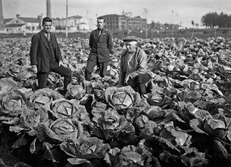 Archive Photos: All Around Harvesting