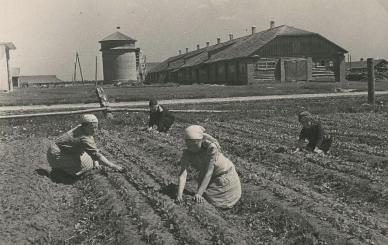 Помощь колхозу Сергей Васин, 1942 год, МАММ/МДФ.