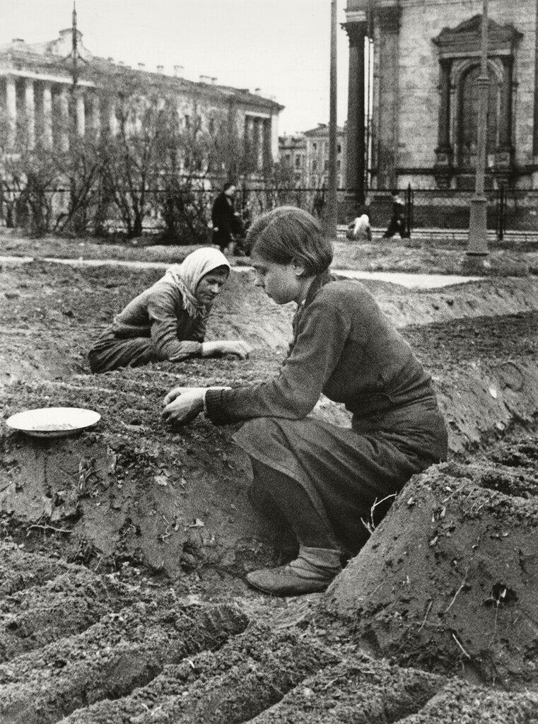 Огород у Исаакиевского собора Валентин Капустин, 1942 год, г. Ленинград, МАММ/МДФ.