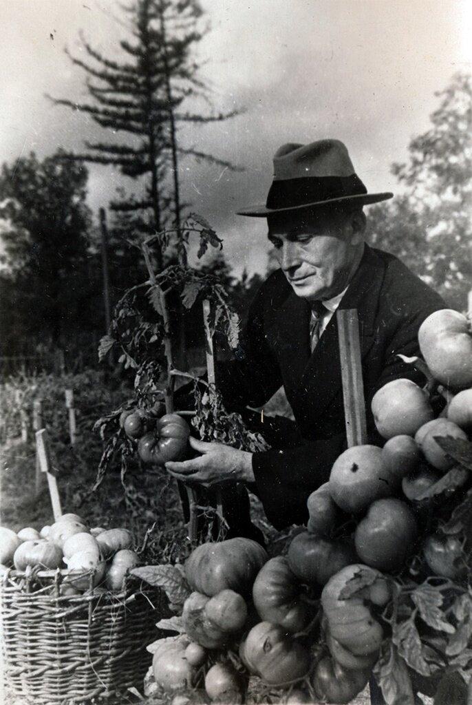 Показательный огород на опытном участке Неизвестный автор, 1946 год, г. Москва, парк Сокольники, Парк культуры и отдыха «Сокольники».