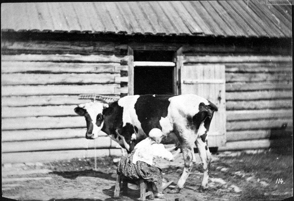 Фото: Уильям Каррик, 1860-1870 гг