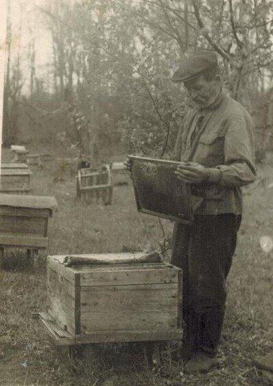Пчеловод Дмитрий Карманов, послевоенные годы Неизвестный автор, 10 июля 1948 - 1 июля 1950 год, из архива Людмилы Бажиной.