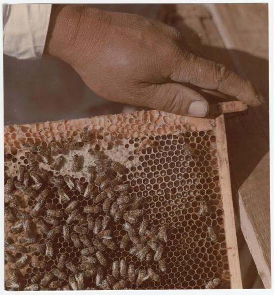 Пчелиные соты Дмитрий Бальтерманц, 1950-е, МАММ/МДФ.
