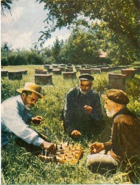 На пасеке Владимир Гребнев, 1957 год, МАММ/МДФ.
