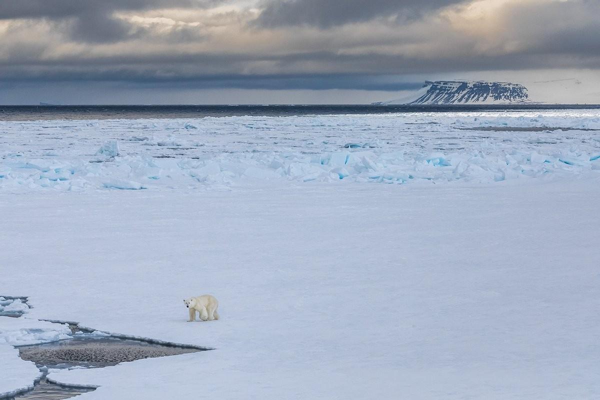 Фаворит конкурса. «Одиночество Арктики». Полярный медведь на припае. Автор Кирилл Уютнов