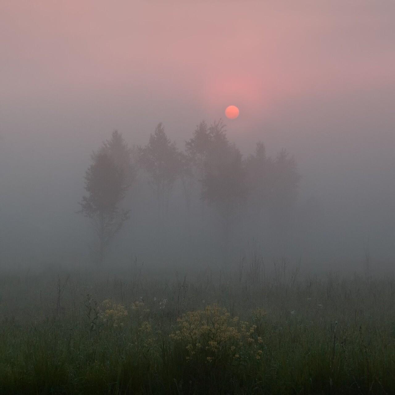 Номинант, 2021. «Свежее утро». Густой туман скрывает солнце на невысоких берегах реки Оки. Фотограф WNDRDR