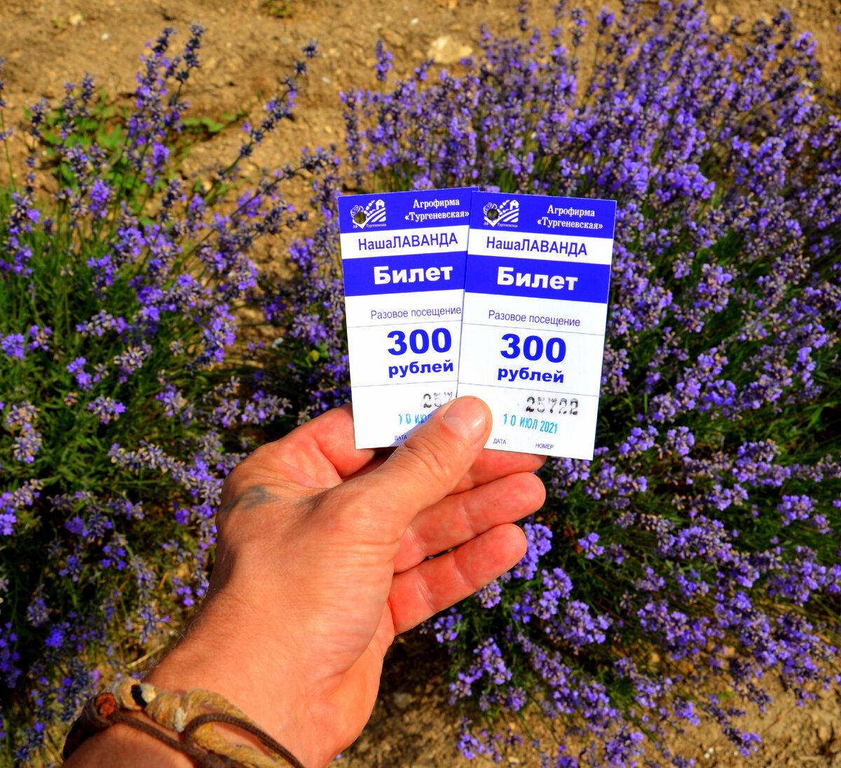 Билеты на лавандовые поля в Тургеневке 10 июля 2021 года. Фото автора.
